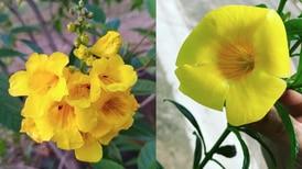 Consejos para cultivar la planta de la esperanza y llenar tu casa de color